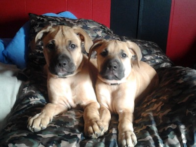 Tank and Aly @ 10weeks
