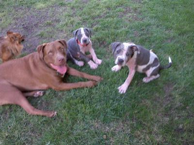 Tyson, Chance and Hope