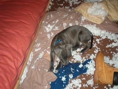 Blu makes it snow