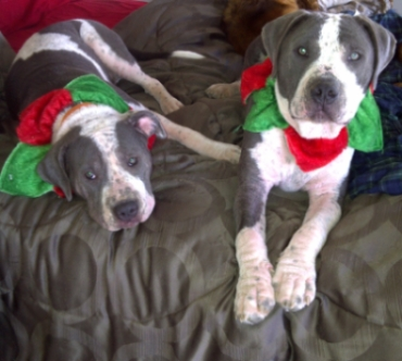 Chance and Hope - Christmas 2010