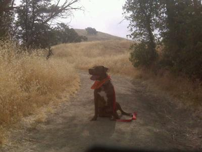 Tyty on his hike.