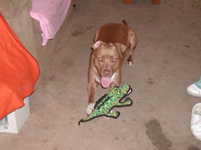 Get the Gator