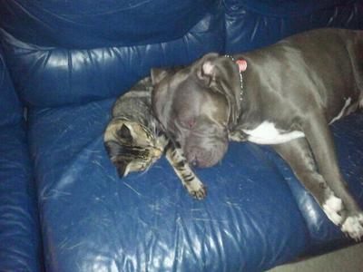 Pibble and kitty love