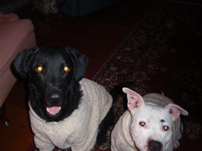 Jack & Jada in Christmas fleece