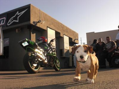 King at 831 Motorcycles in Monterey