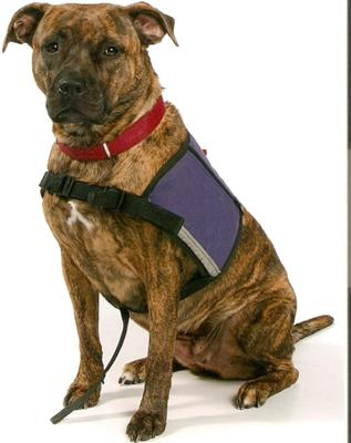 Service Dog Extraordinaire