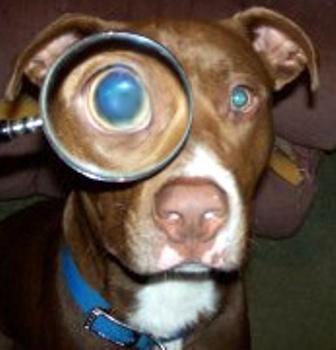 inspector sampson
