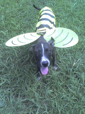 My Very Happy Bumble Bee Baby