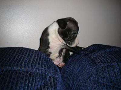 Delta as a pup!