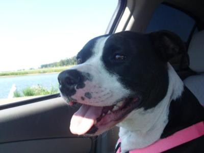 Delta enjoying her car ride!=)