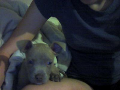 Kaylie (6 weeks)