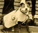 Sergeant Stubby at Georgetown University