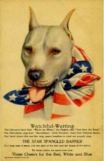 WWI Pit Bull Poster
