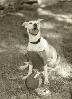 SPCA ad for Texas/O.U weekend, 2000 in Dallas