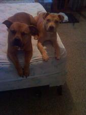 RIP Avery & Abby