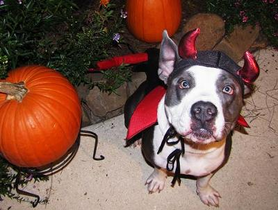 Diablo in the Pumpkin Patch!
