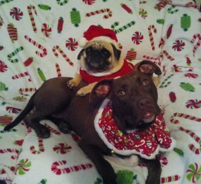 Merry Christmas from Fletcher and Bubba!