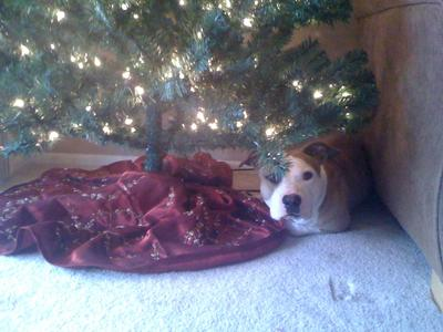 Wait, presents go here?