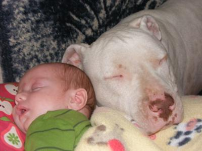 White Dog & his new little brother Teagan