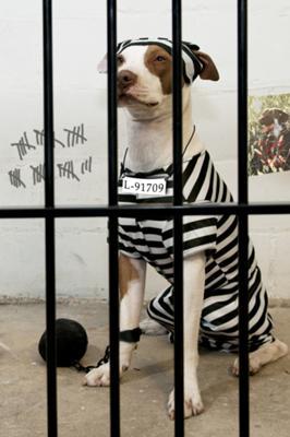 Leven, The Jail Break Artist!